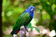 Parrot in Guayaquil, Ecuador