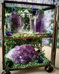 """thecrystaljypsy: """" Another little garden is ready to go home! This one is home to 2 Amethyst points, a gorgeous Amethyst cluster and a Crystal Quartz point. www.TheCrystalJypsy.com #crystals #crystaljypsy #crystalgarden #amethyst #quartz #healing..."""