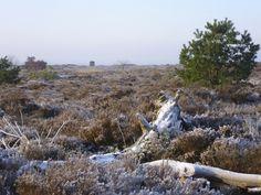 2013-01-13  Uitzicht op het heidegebied van de Koningsbelten