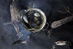 Clams  Nicole Franzen Photography