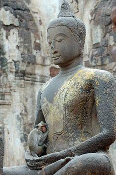 Buddha and monkey, Thailand
