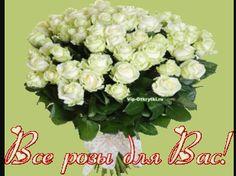 belye_rozy_Vip-Otkrytki.ru