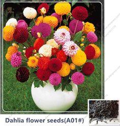 50Seeds/bag Mixed Colors Dahlia Seeds Rare Dahlia Seeds Charming Chinese Flower Seeds Bonsai Plants for Garden A01#