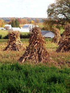 Debra L Barnhart  hay farm stack Amish  New Wilmington Pennsylvania Westminster