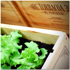 #orto in #cassetta: come riutilizzare le cassette del vino? Farne degli orti in cassetta!  #ortoincassetta #vino #wine #grappa #francoli #francoligrappa #vegetables #recycling