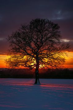 Winter Oak by Grunvald.deviantart.com on @deviantART