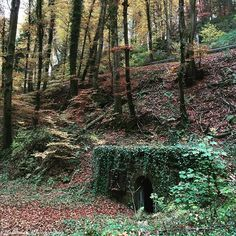 #lost #place #mullerthal #luxemburg #luxembourg #schiessentümpel #autumn #geocaching