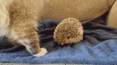 Zdjęcia 23 kotów, które od razu pożałowały swoich decyzji - Natopie.to