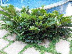 image sourceflorakarnataka.ces.iisc.ernet.in