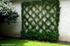 vines overhead trellis | The interaction of vines with walls or existing blocks when no trellis ...