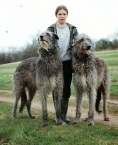 Breesfalt Deerhounds