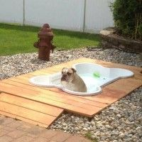 Get a gift that will benefit you as well as your dog, this little bone shaped pool may be the best bet.