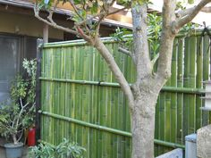 46 Best bamboo hut & bamboo fences images in 2016 | Bamboo