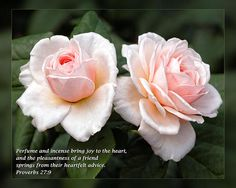 'Proverbs 27:9' from Daily Scripture Project by artist Dawn Currie featured today in Greeting Cards; previously featured in 5 other FAA groups.   Perfume and incense bring joy to the heart, and the pleasantness of a friend springs from their heartfelt advice. Proverbs 27:9   A pair of delicate pink roses. Photographed at Leu Gardens in Orlando Florida. Custom framed prints, canvases, and cards available. #DailyScripture #Christian #Proverbs