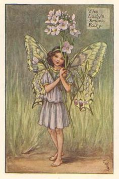 FLOWER FAIRIES: LADY'S SMOCK. Old Print. Cicely Mary Barker.c.1930