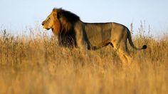 'Lista de precios': ¿Cuánto cuesta matar a un animal exótico en Sudáfrica?