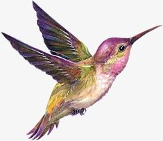 Hummingbird PNG and Clipart Watercolor Hummingbird, Hummingbird Tattoo, Watercolor Bird, Watercolor Animals, Watercolor Paintings, Images Colibri, Art Colibri, Bird Drawings, Colorful Birds