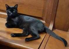 BAGHEERA - My Cat