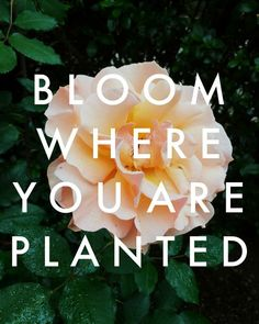 Bloom Where You are Planted: Embracing Change — La Petite Farmhouse Uncertainty Quotes, Plants Quotes, Modern Farmhouse Design, Bloom Where You Are Planted, Change Is Good, Simple Living, Newlyweds, Cool Words, Life Is Good