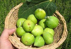 fichi bianchi del Cilento DOP - Cilento figs
