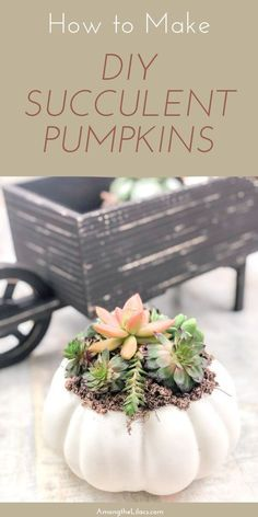 Grab some pumpkins and succulents for this beautiful DIY craft! If you've always loved the way pumpkin succulent crafts look during the Fall season, now's the time to learn how to make your own with this easy DIY craft tutorial! Diy Garden Projects, Garden Crafts, Garden Ideas, Succulent Centerpieces, Succulents Diy, Succulent Care, Perfect Plants, Diy Pumpkin, How To Make Diy