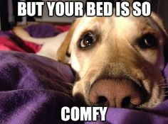 Have you engaged in the never ending battle of Dog Vs. Human's Bed. They have the cute eyes! THOSE PUPPY EYES! Click the doggie for more cuteness or visit us here: http://www.whateverydogdeserves.com/blog/healthy-dog-sleep-bed/