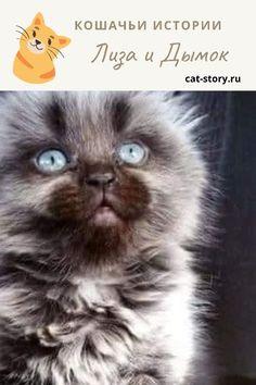 Лиза и Дымок… — Кошачьи истории Cats, Animals, Gatos, Animales, Animaux, Animal, Cat, Animais, Kitty