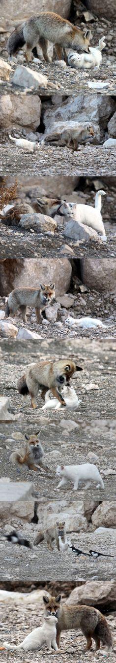 Bästisarna katten och räven