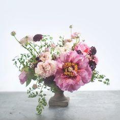 26 Images PlantsPeonies 2019 In Flowersamp; Best OZkXTPiu