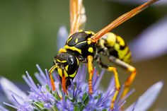 New blog post! Bees and Wasps: the dangers of being stung, and what you should do: http://www.bluecrossanimalhospital.ca/pet-hazards/beeswasps-stings-and-your-pet/