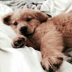 Sometimes you want to sleep in #puppies #dogs #inspo #lazydays