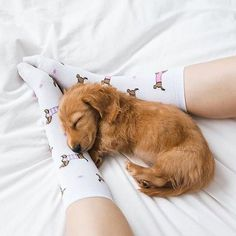 WARNING: HIgh level of cuteness Follow: @odonocuida . . #dog #dogsofinstagram #dogs #instadog #dogstagram #doglover #ilovemydog #dogoftheday #lovedogs #dogsofinsta #instagramdogs #doglife #doglovers #dogsofig #cutedog #doglove #dogslife #caesdeportugal #caesdosportugueses #puppylove #petstagram #instapets #cutepets #pets #puppydog #cutedogs