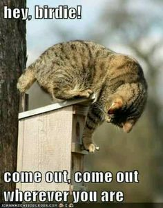 Cats idea of fun :-)