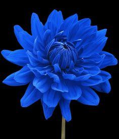 Blue flower #pinterestingblue I love flowers