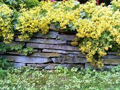 idées pour un mur en pierres dans votre jardin