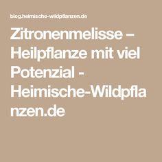 Zitronenmelisse – Heilpflanze mit viel Potenzial - Heimische-Wildpflanzen.de