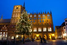 Stralsund City Hall | ... tree in front of city hall,on Alter Markt Square in Stralsund, Germany