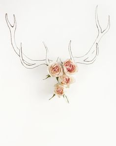 shoperiin:    Antlers by Kari Herer.
