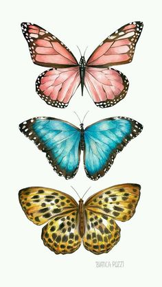 Ilustração by Bianca Pozzi.Bianca Pozzi on We Heart ItDelicados & Coloridos Source by I do not take credit for the images in this post.ImageFind images and videos about butterfly on We Heart It - the app to get lost in what you love. Butterfly Images, Butterfly Drawing, Butterfly Painting, Drawings Of Butterflies, Butterfly Quotes, Pink Butterfly, Butterfly Wings, Art Papillon, Photo Wall Collage