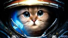 Starcraft Sci Fi Science Fiction Humor Funny Astronaut Animals Cats Felines Cute Face Eyes Whiskers Suit