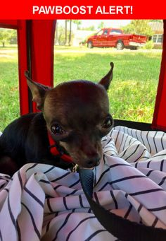 Is this your lost pet? Found in Phoenix, AZ 85016. Please spread the word so we can find the owner!  Tiny black chihuahua (under 5lbs)  Nearest Address: Near E Bethany Home Rd & N 7th St.