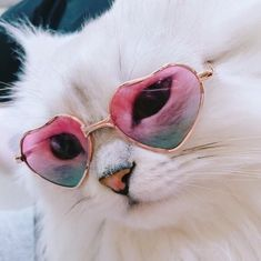 Discovered by RiRi. Find images and videos about cute, white and aesthetic on We Heart It - the app to get lost in what you love. Animals And Pets, Baby Animals, Funny Animals, Cute Animals, Funny Cats, Crazy Cat Lady, Crazy Cats, I Love Cats, Cool Cats