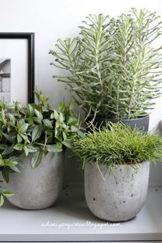 Outdoor Planters, Outdoor Landscaping, House Plants Decor, Plant Decor, Balcony Garden, Garden Pots, Container Plants, Container Gardening, Pot Jardin