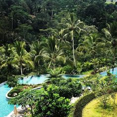 Bali padma ubud  #bali #resorts #balipadmaubud #padmaubud #padmaubudresort 5 Oceans, Flies Away, Ubud, Resorts, Bali, Water, Plants, Travel, Outdoor