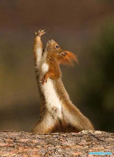 Dancing Chipmunk #humor #lol #funny