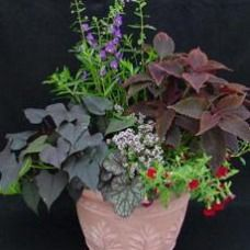 green and red, calm colours, container planting ideas, garden