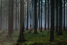 Quickly and easily achieve an atmospheric and dreamy look for your forest landscape photos in Adobe Lightroom (Desktop and Mobile). Forest Photography, Great Backgrounds, Cute Boys Images, Forest Landscape, Dark Forest, Landscape Photos, Lightroom Presets, Photo Editing, Landscapes