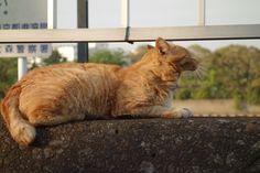 猫 ネコ ねこの日々   じぇいなすと、うちニャンズ+外猫いっぱい   ページ 2