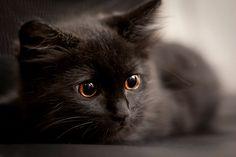 i love grey cats