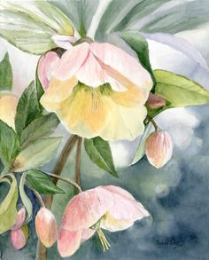 Hellebore Winter bells by SylviaTwiss Watercolor Garden Drawing, Home Design Decor, Watercolor Paintings, Watercolours, All Design, Botanical Gardens, Flower Art, Flora, A5